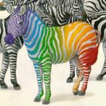 standing out zebra