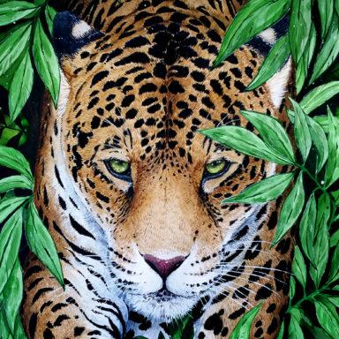 Jaguar Feature Image