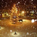 Christmas Cat Akureyri